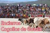 Fiestas de Cogollos de Guadix 2015 del 25 al 29 de agosto [Programa]