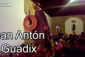 Fiesta de San Antón [Vídeos]