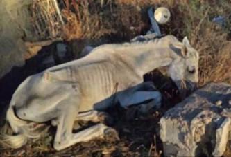 La Policía local de Guadix denuncia el maltrato que está sufriendo este caballo