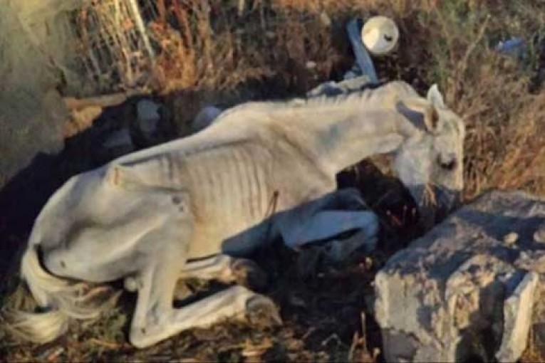 Denuncia por maltrato animal