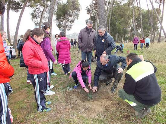 Plantando pinos en el vivero