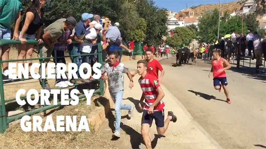 Encierros de toros en Cortes y Graena 2017