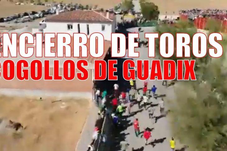 Encierros Cogollos de Guadix