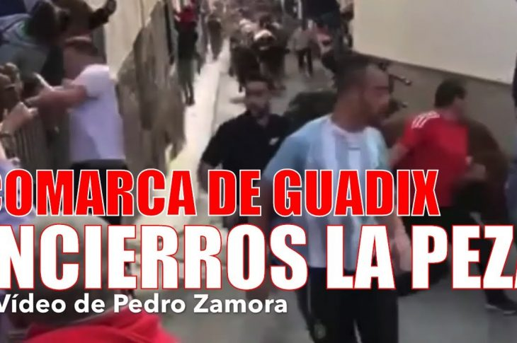 Tradicionales encierros taurinos en LA PEZA