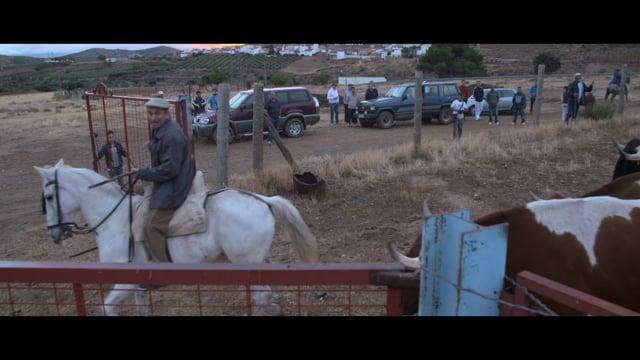 La Peza - En compañía del toro