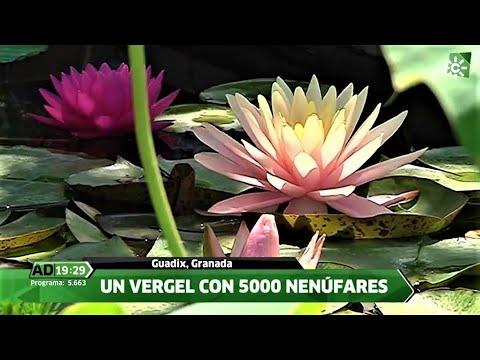 Un jardín de Nenúfares en Guadix